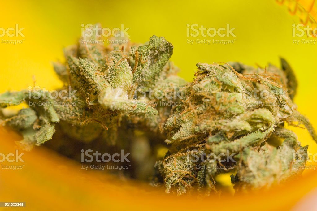 Cannabis Buds in Container stock photo