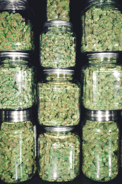 Cannabis Dispensary Supply of Marijuana Bud Jars stock photo