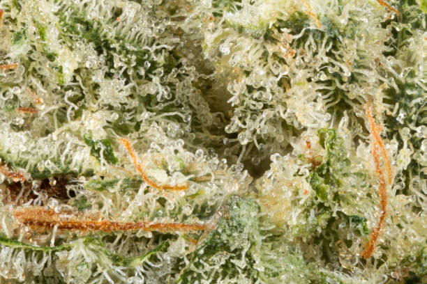 cannabis flower - stamen stock photos and pictures