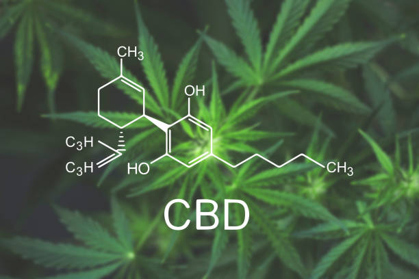 CBN Cannabis flowers at the onset of flowering close up top view - foto stock