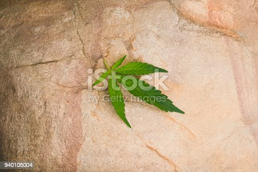936410150istockphoto cannabis hemp leaves in hard shadows on stone 940105004