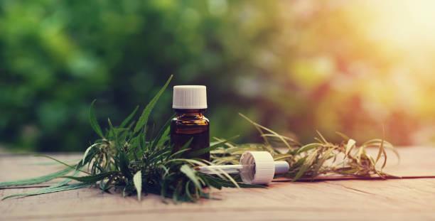 Cannabis-Kräuter und Blätter mit Ölextrakten in Gläsern. Medizinisches Konzept – Foto