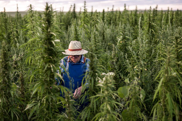 Cannabis improving mental health