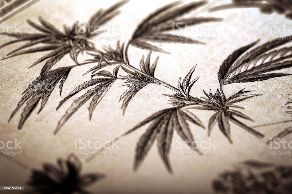 Cannabis in antique book stock photo