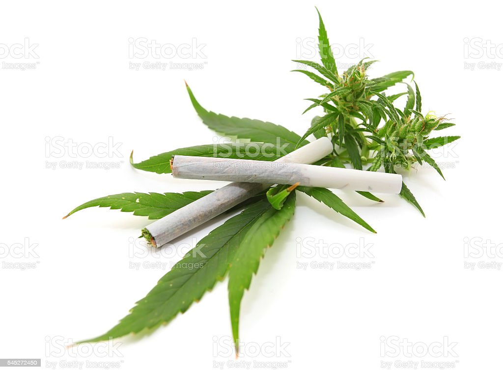 Cannabis leaf, marijuana stock photo
