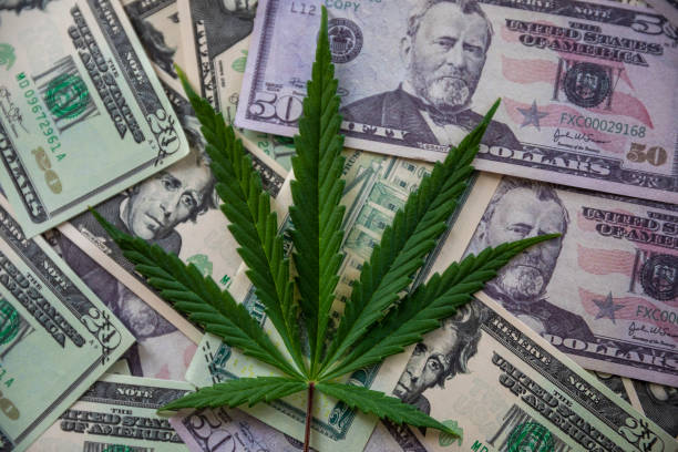 Cannabis Leaf On American Dolllar. Narcotic concept photo. NOrcotic image concept. Cannabis leaf background. Dirty money mafia concept. Marijuana. drug cartel stock pictures, royalty-free photos & images