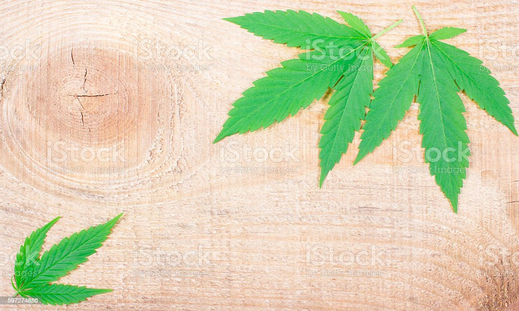 Cannabis leaf on wooden table. Close Up. royalty-free stock photo