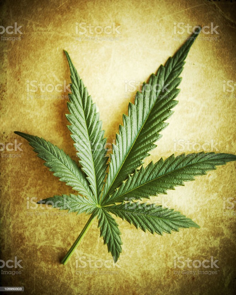 Cannabis Leaf. royalty-free stock photo