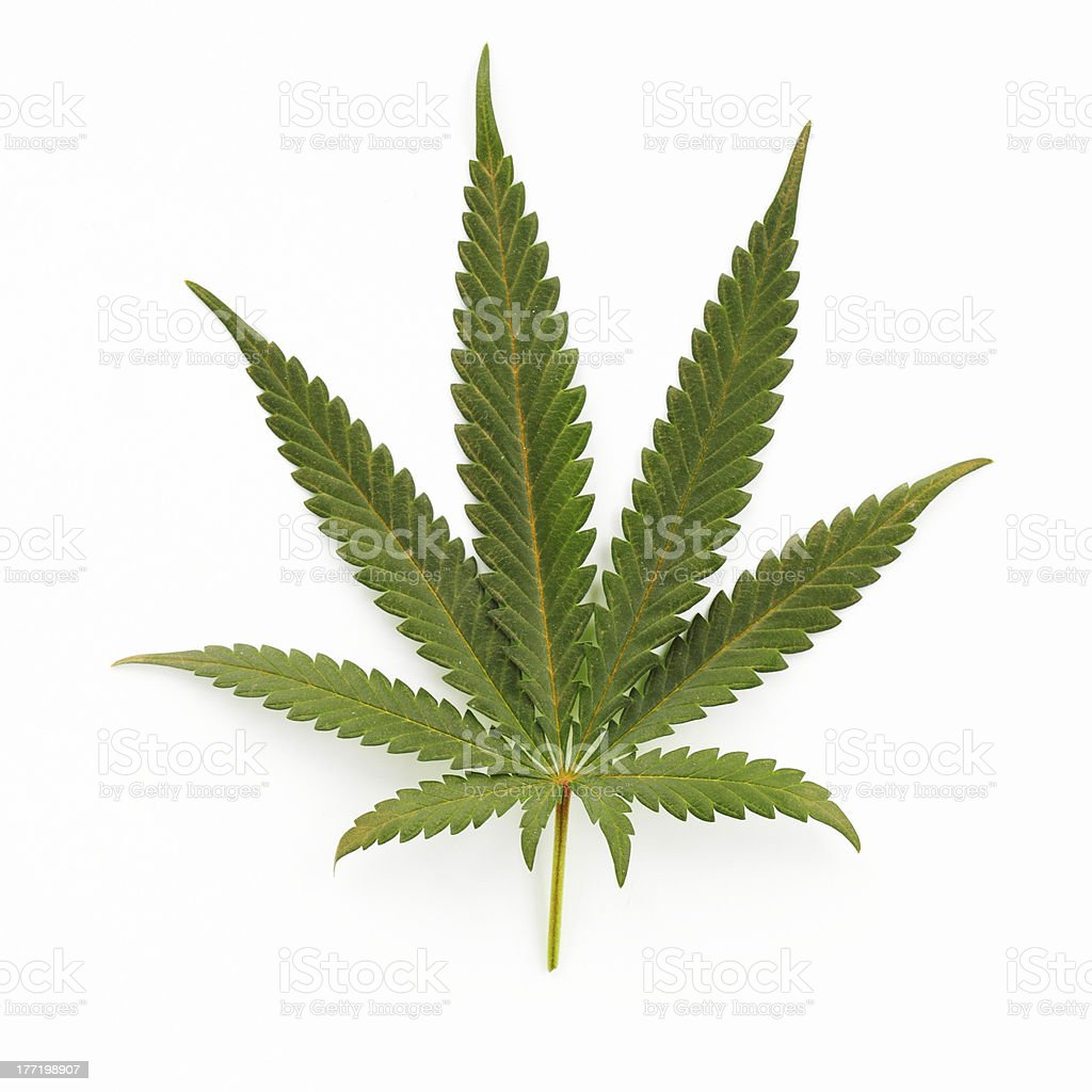 Image result for Cannabis Leaf
