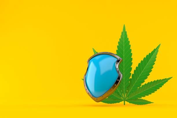 Cannabis-Blatt mit Schutzschild – Foto