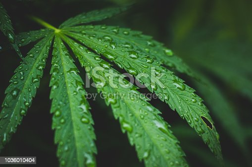 Marijuana in rain. Legalize it.