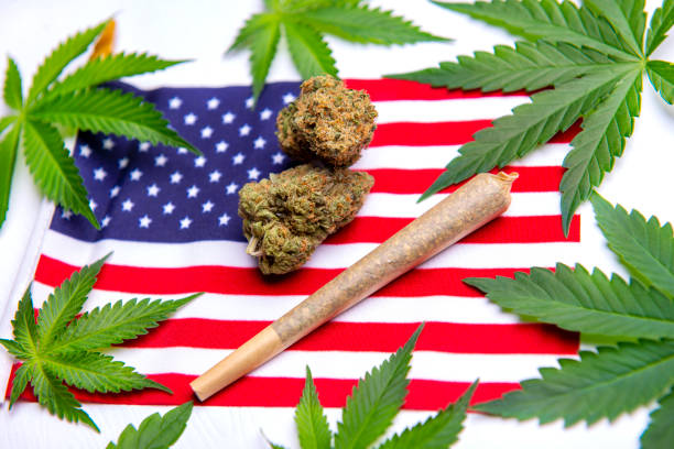 Cannabis leaves, dry nugs and rolled joint over the american flag stock photo