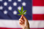 istock cannabis legalization in the united states of america. cannabis leaf in hands on usa flag background 1227117638