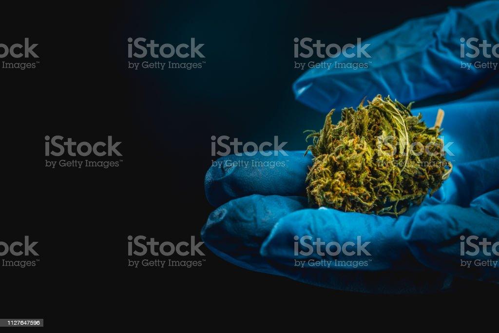 Cannabis, Marijuana, fond noir, gant de chirurgie - Photo