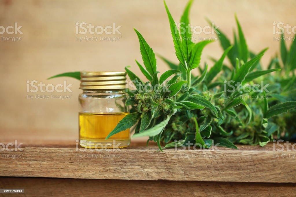 cannabis oil and hemp stock photo