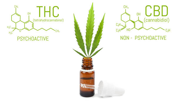 CBD cannabis oil with dropper, green hemp leaf in bottle. Marijuana products isolated white background. Medical concept CBD cannabis oil with dropper, green hemp leaf in bottle. Marijuana products isolated white background. Medical concept thc stock pictures, royalty-free photos & images