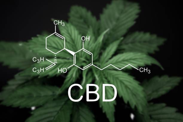 CBD. Cannabis on a black background isolate. Beautiful background. Vegetation period. cannabidiol - foto stock