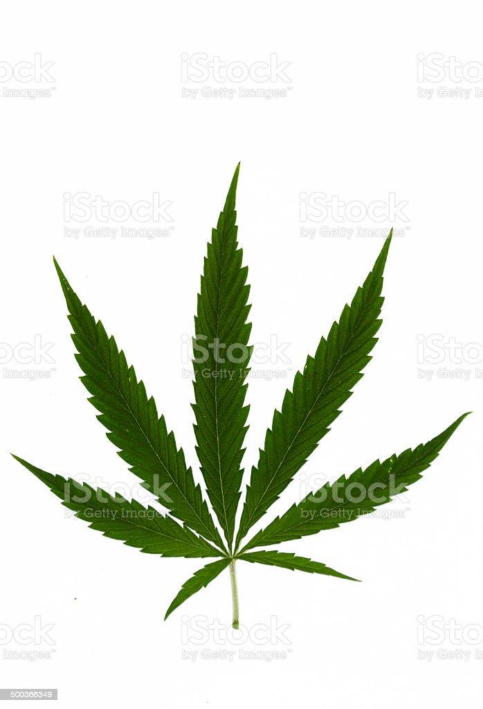 Cannabis royalty-free stock photo