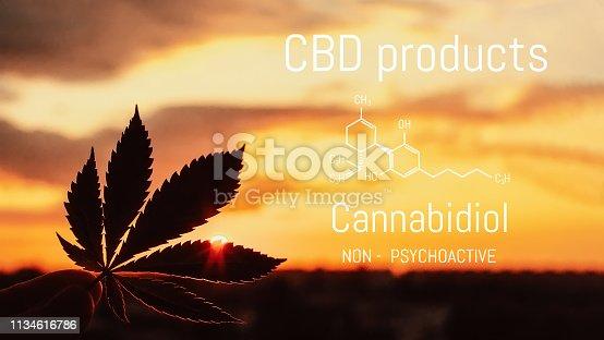 istock CBD Cannabis product. Medical Marijuana and Cannabidiol CBD chemical formula. Thematic photos of growing hemp and ganja. Background image 1134616786