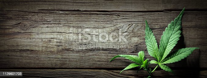 Cannabis Sativa light With Down THC For Medical Treatment