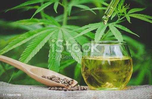istock Cannabis seeds and CBD oil cannabis extract, green hemp leaf background, Medical cannabis concept. 1175649299