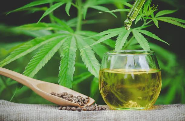 cannabissamen und cbd-öl-cannabis-extrakt, grüner hanfblatt hintergrund, medizinische cannabis-konzept. - matheblatt etiketten stock-fotos und bilder