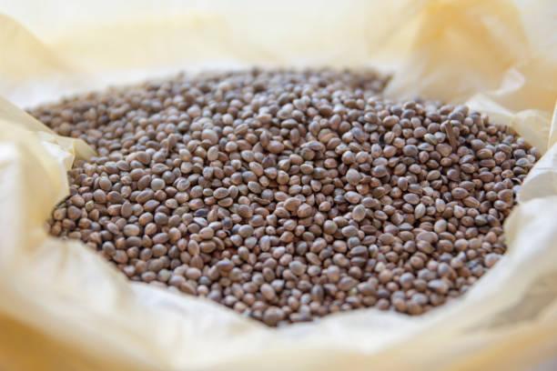 cannabis seeds stock photo