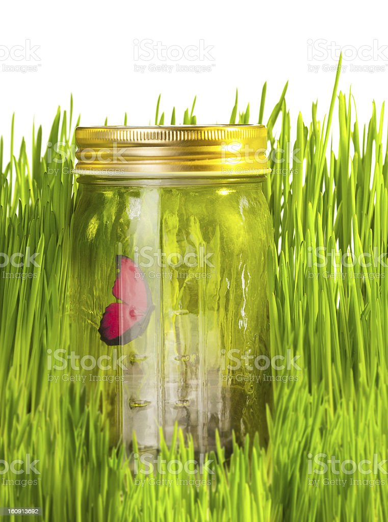 Canned summer piece royalty-free stock photo