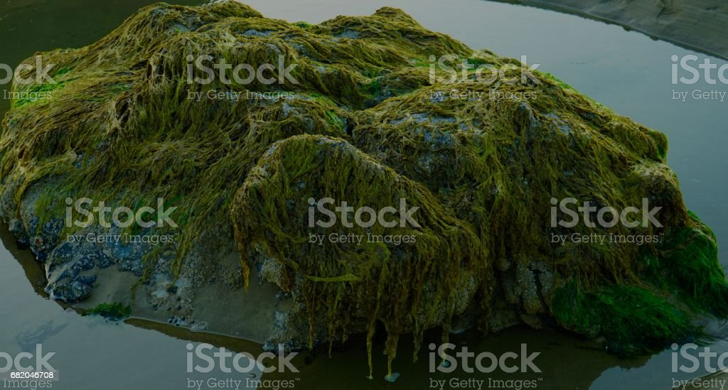 Cannon Beach Green Weed stock photo