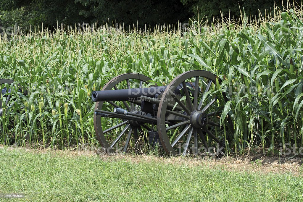 cannon in hiding royalty-free stock photo
