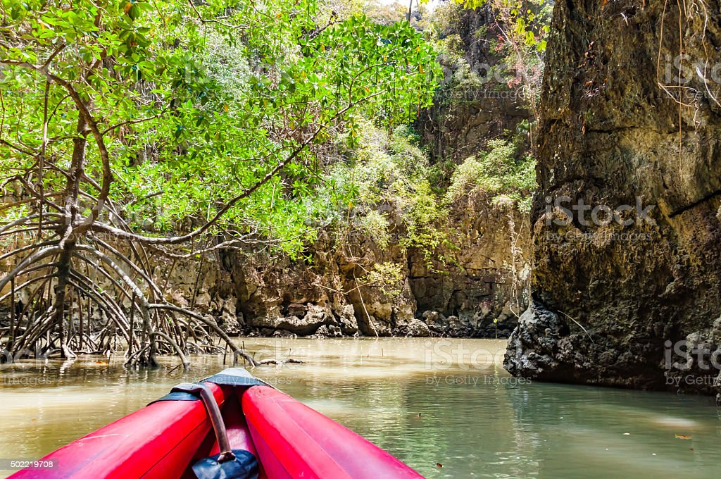 Canoe paddle through a mangrove forrest in Phang nga bay stock photo