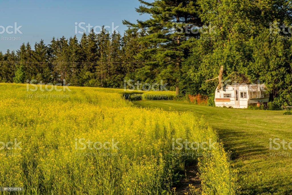 Canola farm stock photo