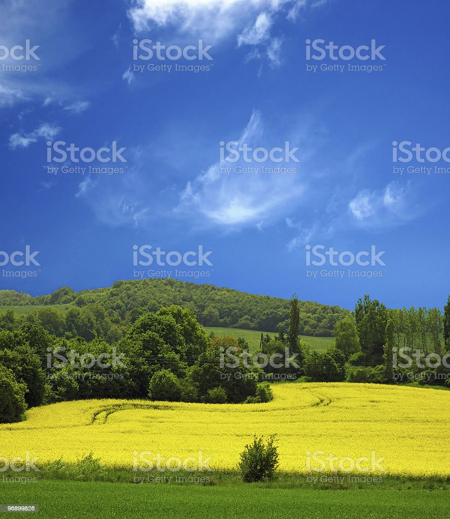 Canola Field for Green Fuel royalty-free stock photo