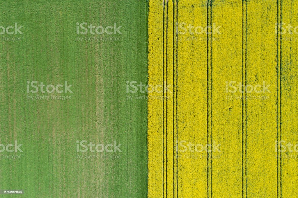 Canola field from above stock photo