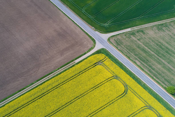 Canola field from above Aerial landscape view of farm fields with bright yellow canola, lush green fields and roads. monoculture stock pictures, royalty-free photos & images