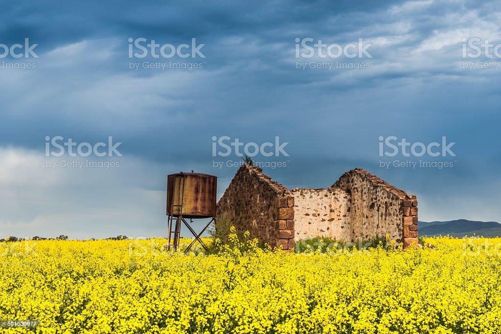 Canola Field in Flower, Old Ruin,  Watertank, Storm Clouds, Australia stock photo