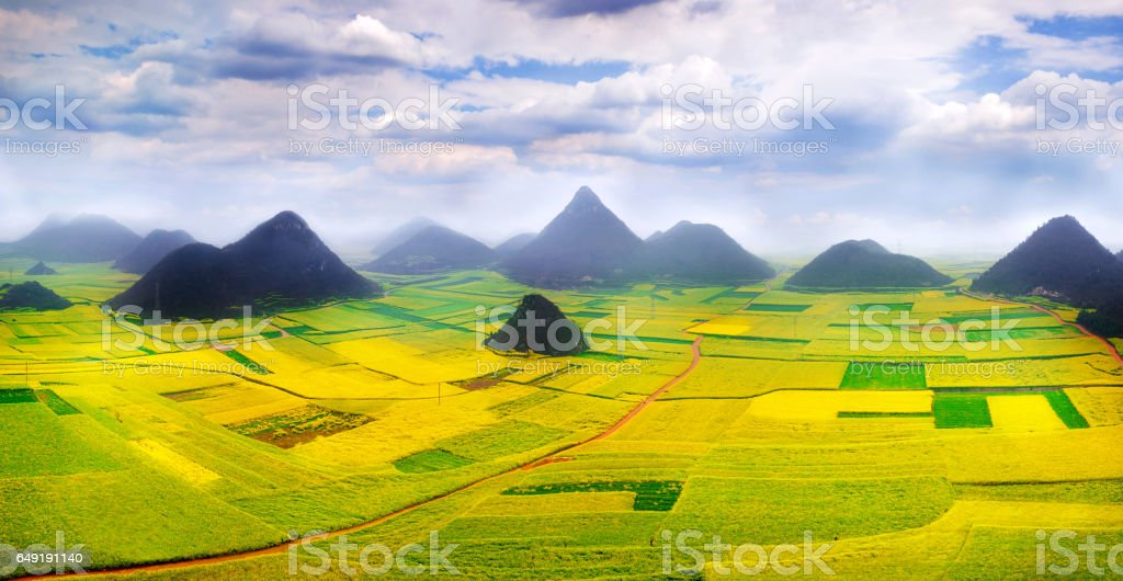 Canola field, rapeseed flower field with morning fog in China. stock photo
