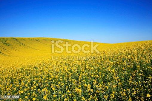 Rolling landscape in spring