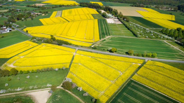 Canola fields and agricultural area in springtime - aerial view Canola fields and agricultural area in springtime - aerial view agricultural cooperative stock pictures, royalty-free photos & images