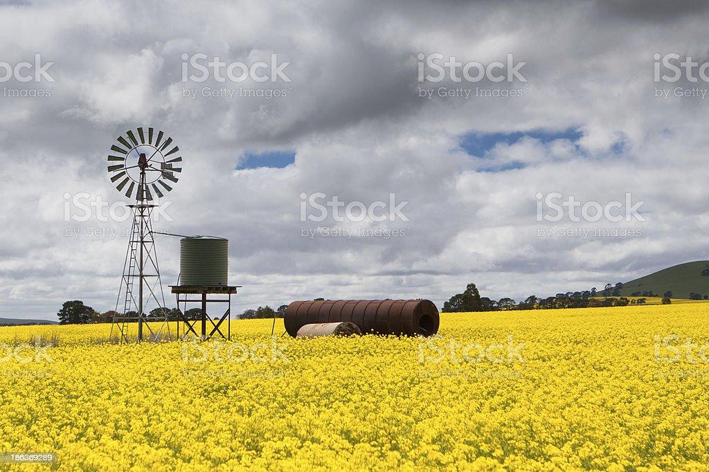 Canola Fields Near Smeaton stock photo