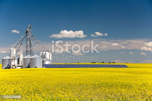 A steel grain silo storage tank with solar panel in a yellow canola field in bloom in Alberta, Canada.