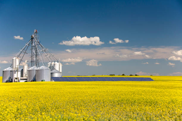 Canola Grain Silo Solar Panel A steel grain silo storage tank with solar panel in a yellow canola field in bloom in Alberta, Canada. canola stock pictures, royalty-free photos & images