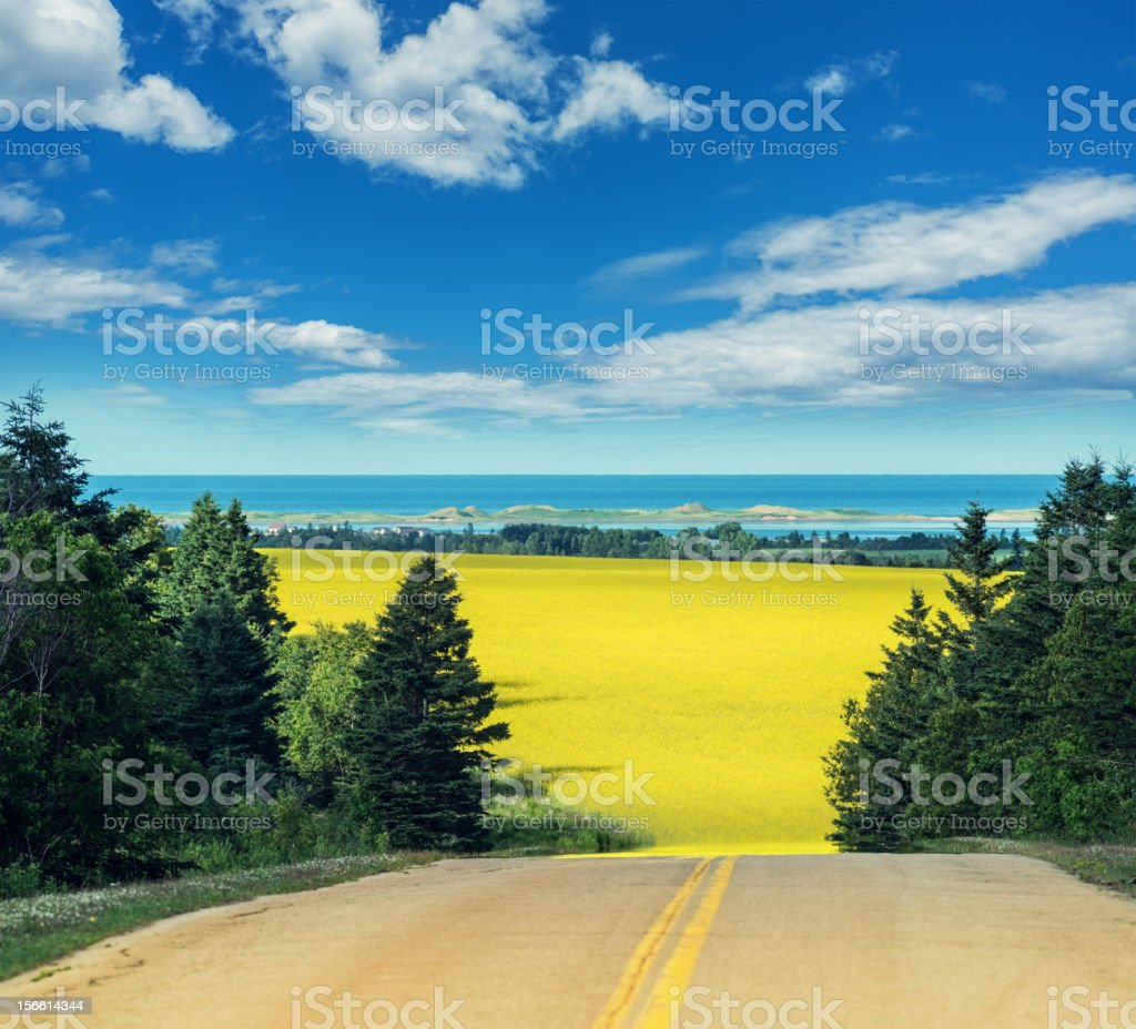 Canola Road royalty-free stock photo