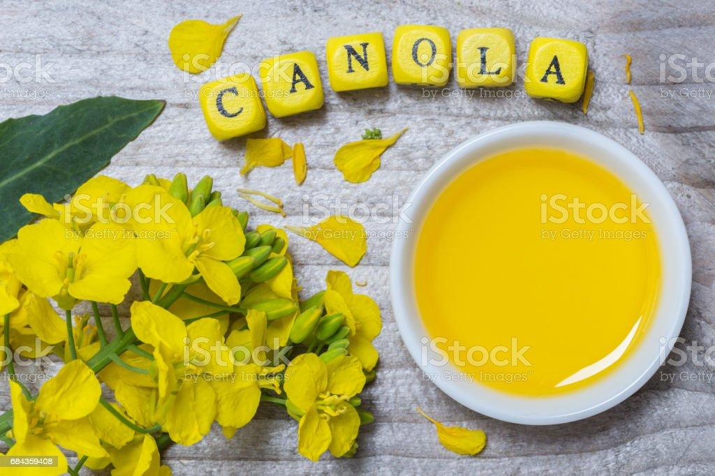 Canola with oil concept on gray wood stock photo