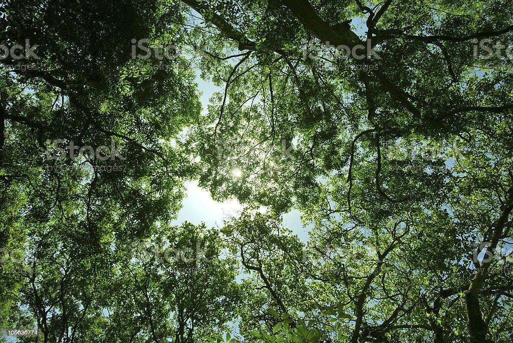 Canopy Background stock photo