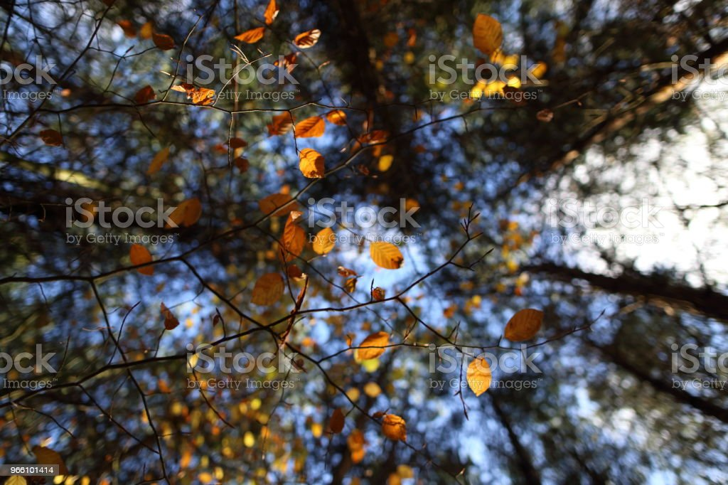 A canopy of colorful leaves in autumn - Стоковые фото Без людей роялти-фри