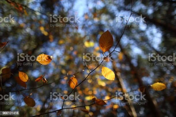 Навес Из Разноцветных Листьев Осенью — стоковые фотографии и другие картинки Без людей