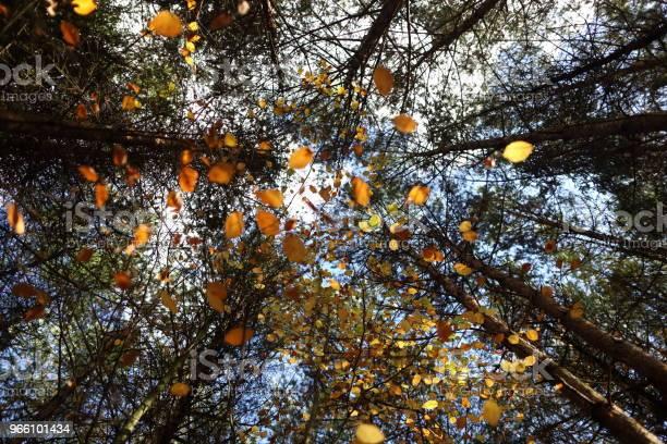 Навес Из Разноцветных Листьев Осенью — стоковые фотографии и другие картинки Апельсин
