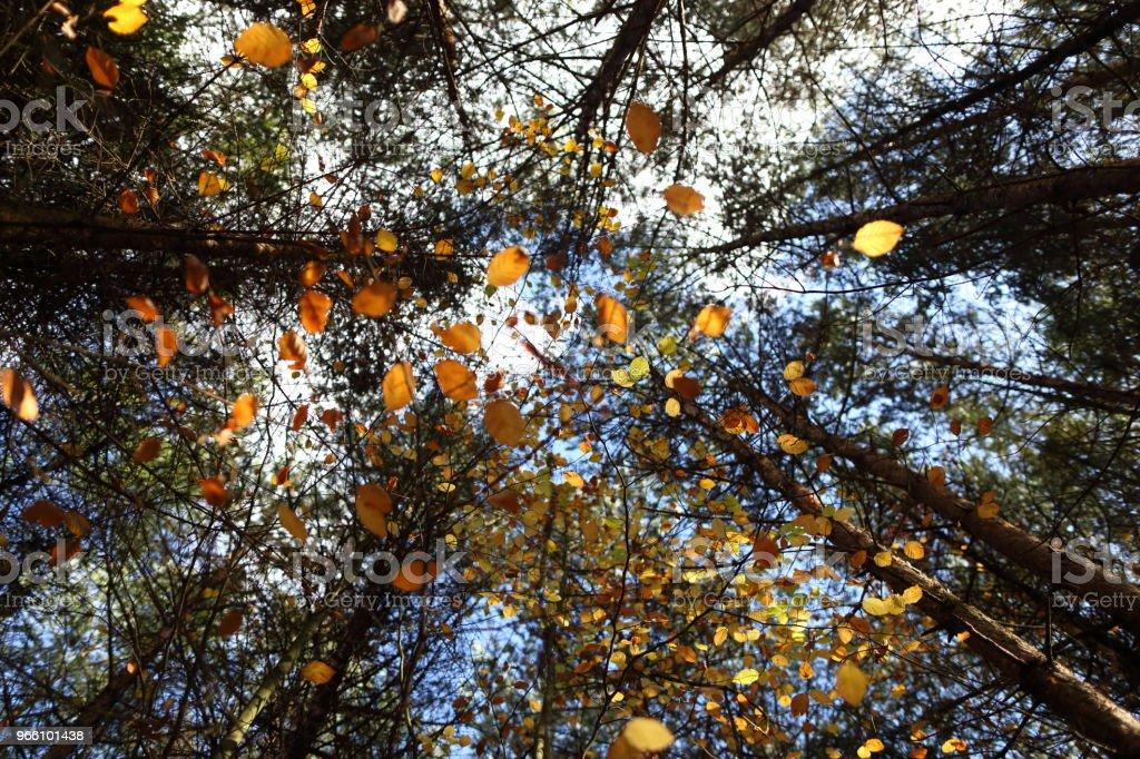 Ett tak av färgglada löv på hösten - Royaltyfri Beskrivande färg Bildbanksbilder