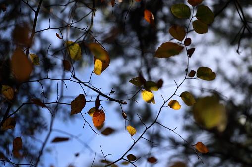 Een Luifel Van Kleurrijke Bladeren In De Herfst Stockfoto en meer beelden van Abeel